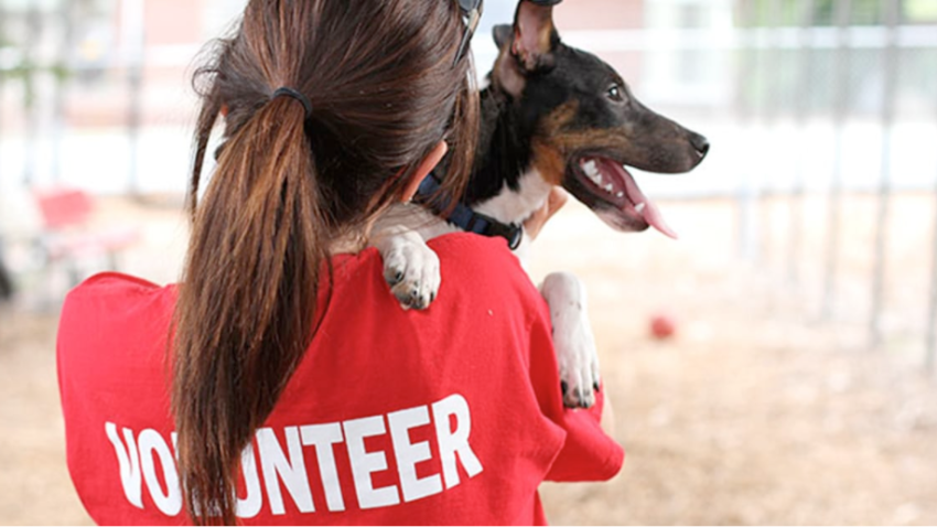 animal shelter volunteer